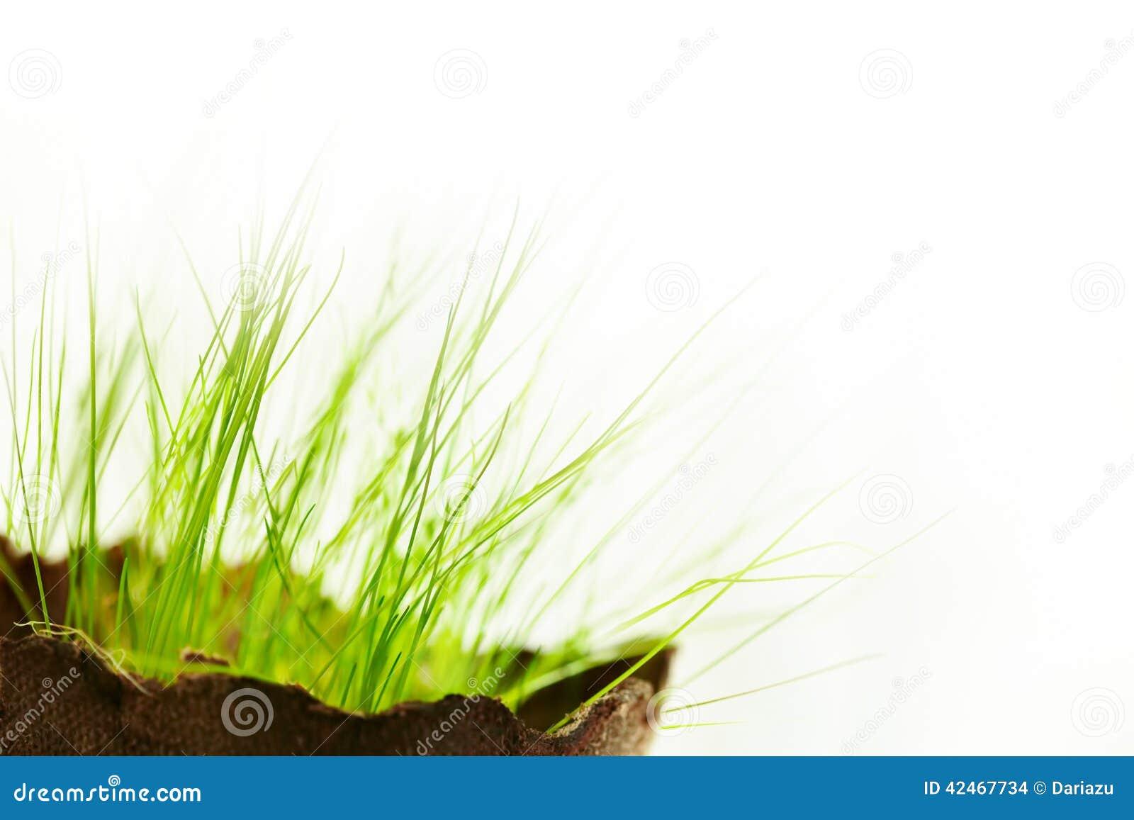 Junges Gras über Weiß
