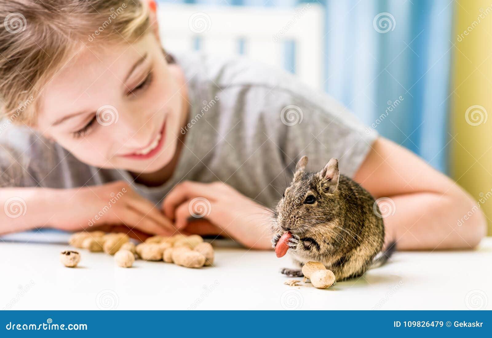 Junges Mädchen beobachten das degu Eichhörnchen