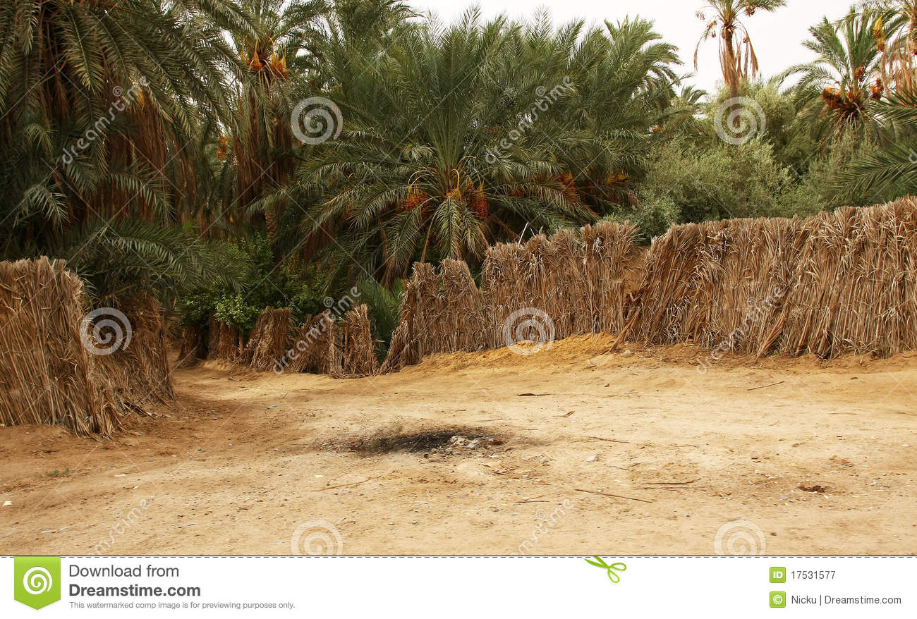 Oasis in the desert surrounded by palm trees royalty free
