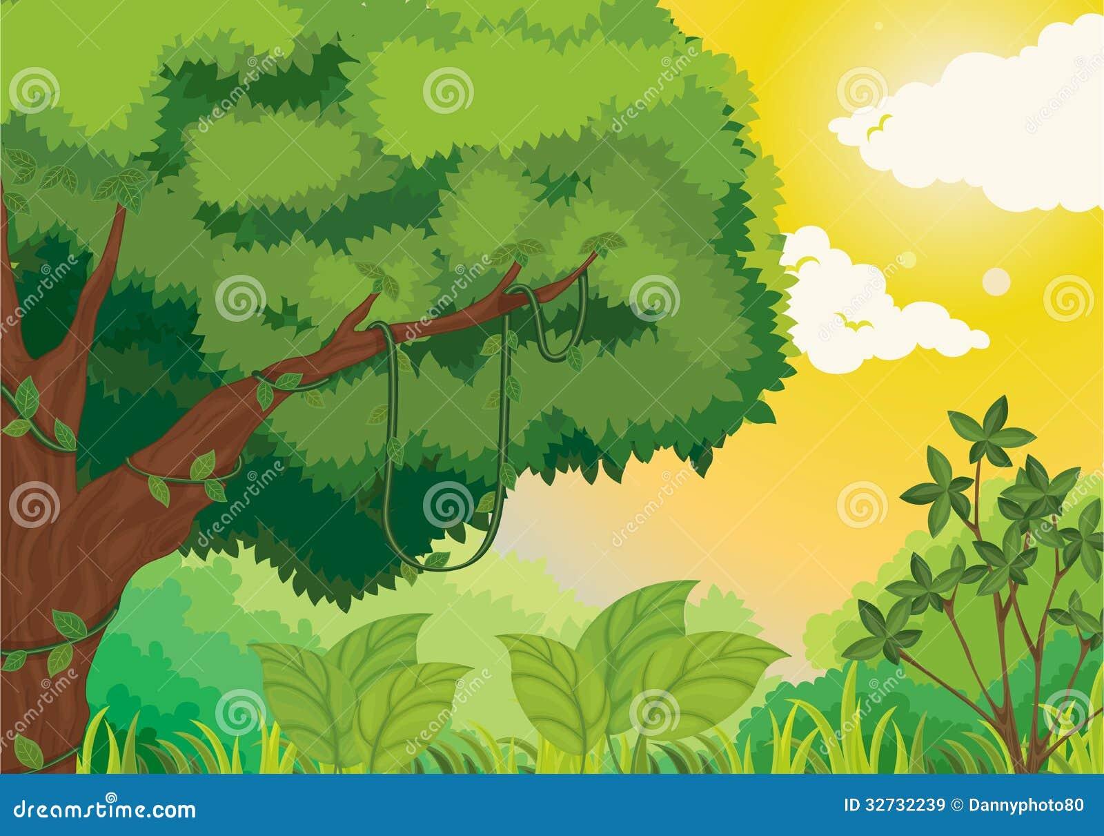 Jungle au coucher du soleil