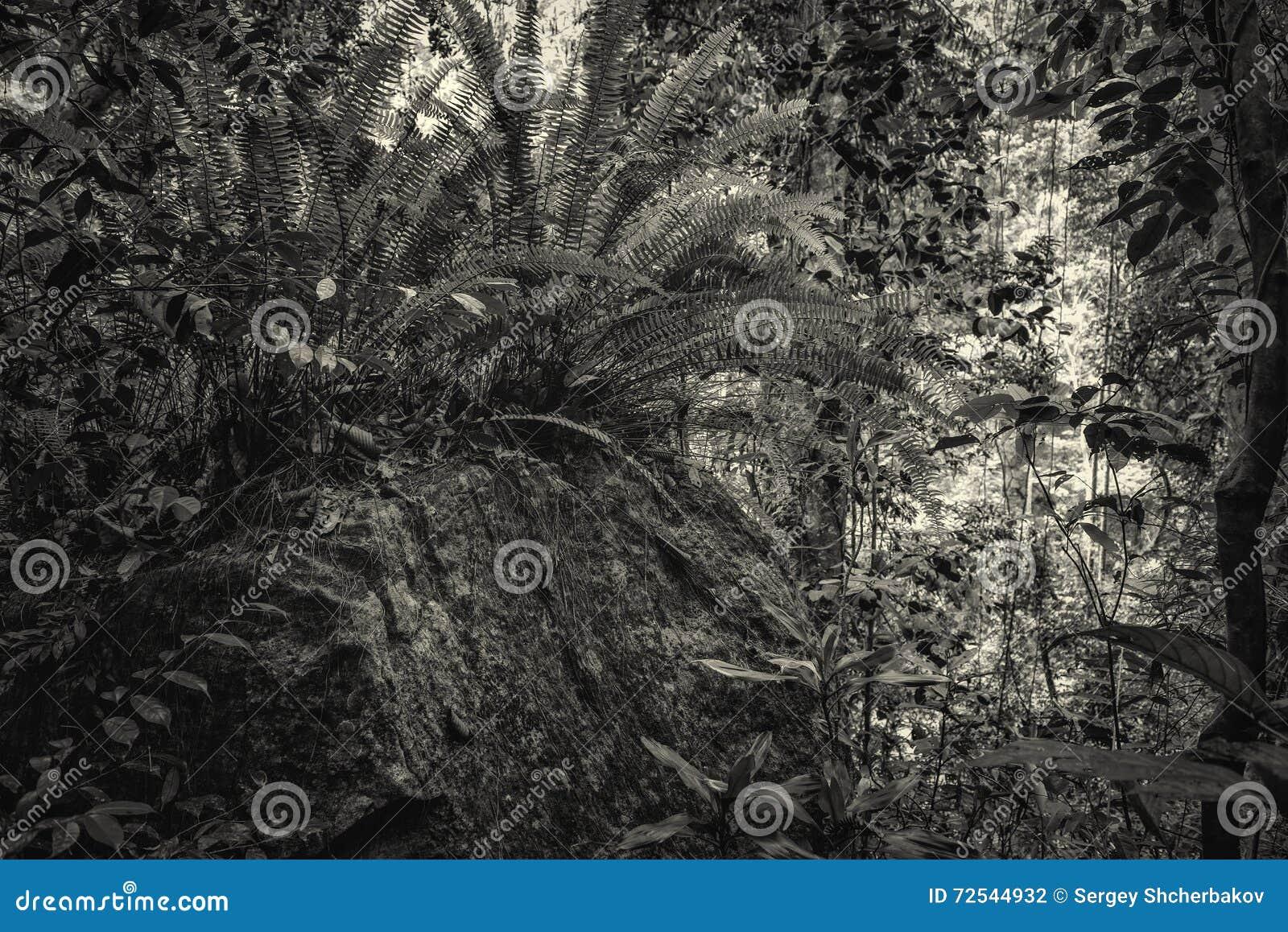 Jungle in black and white