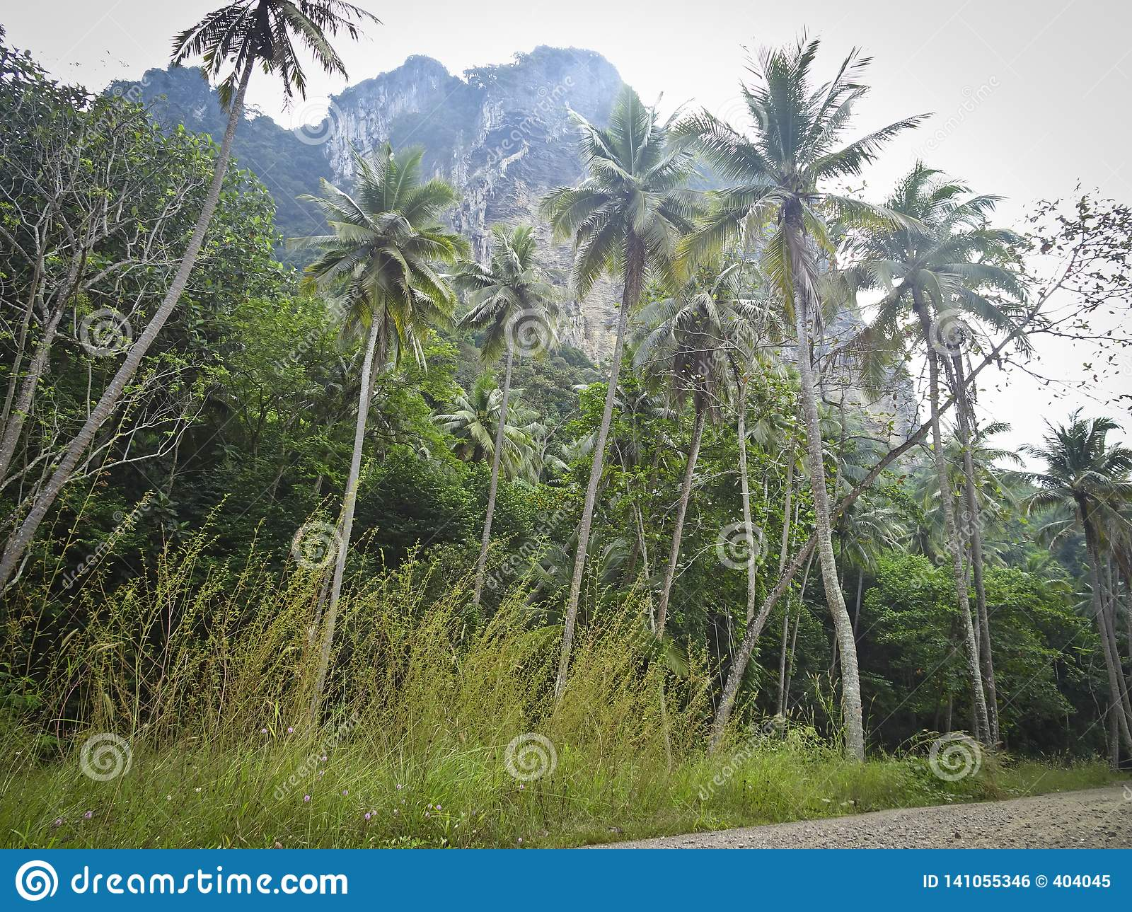 Jungle with coconut trees under a high rocky mountain