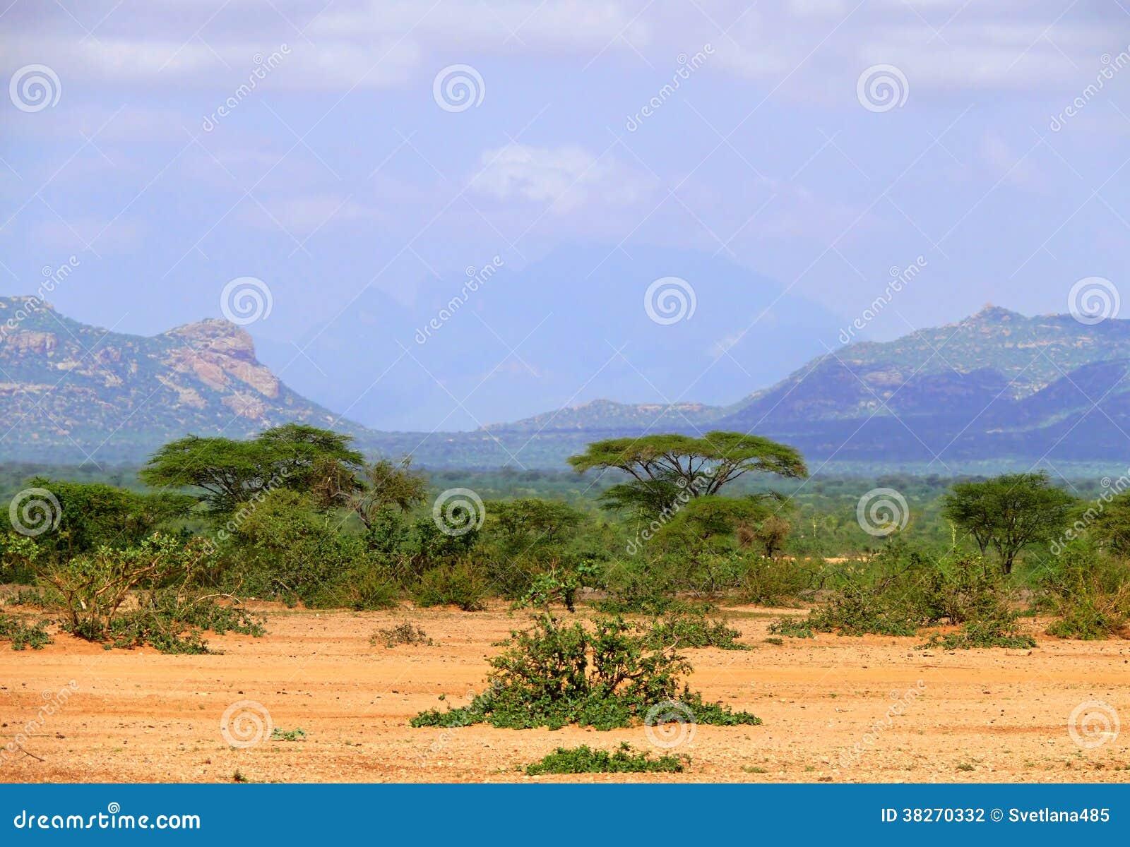 Afrika Djungel