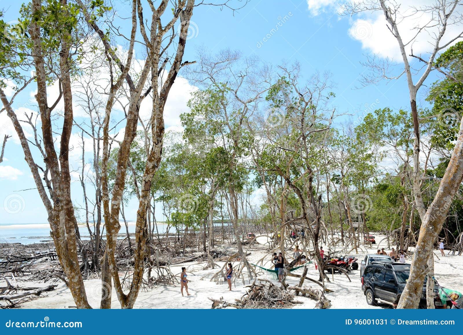 Jungle de seco de Mangue