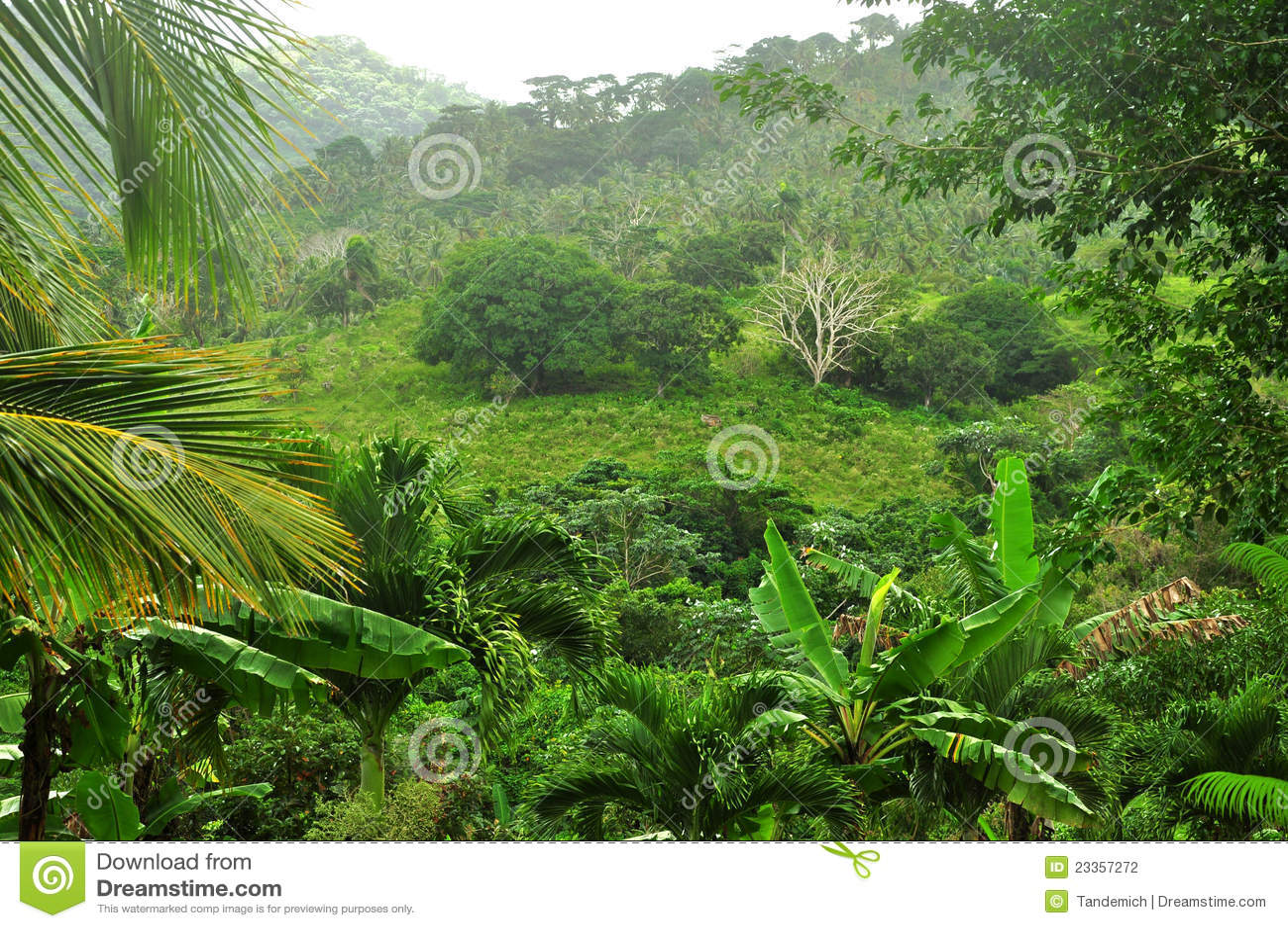 Jungle At Dominican Republic Stock Photo Image Of