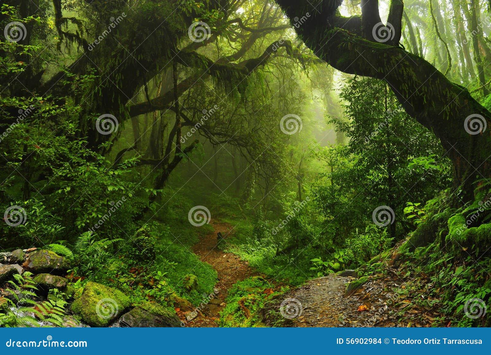 Jungle du Népal