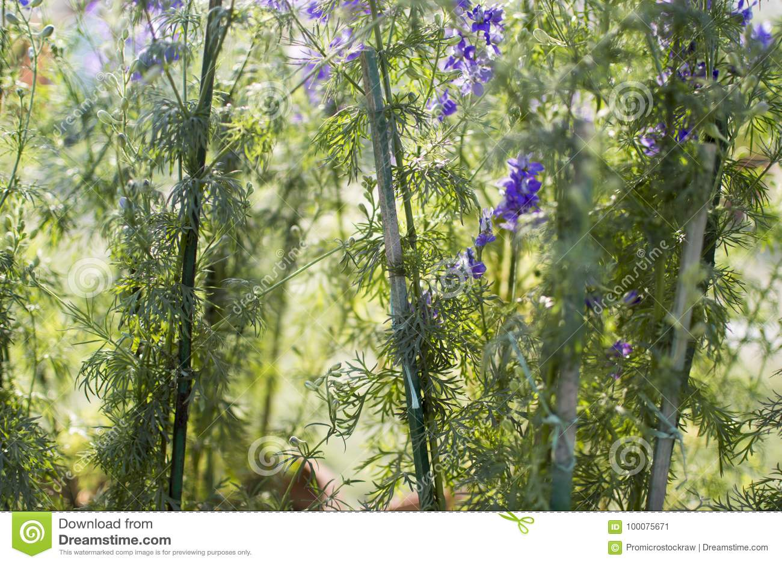 Jungle Of Blue Flowers And Plants Stock Image Image Of Botanical