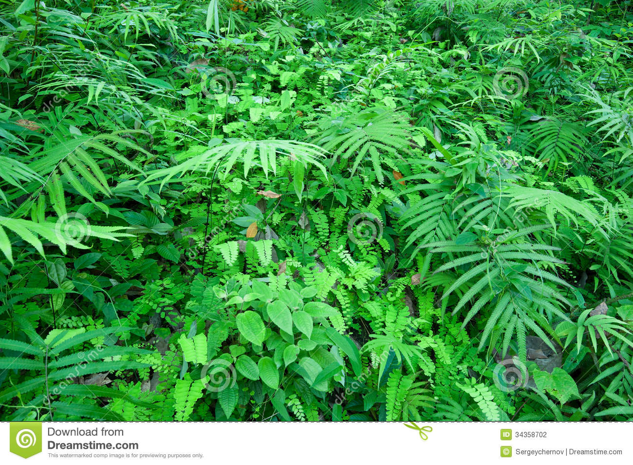 Jungle Grass Background Stock Photography - Image: 34358702