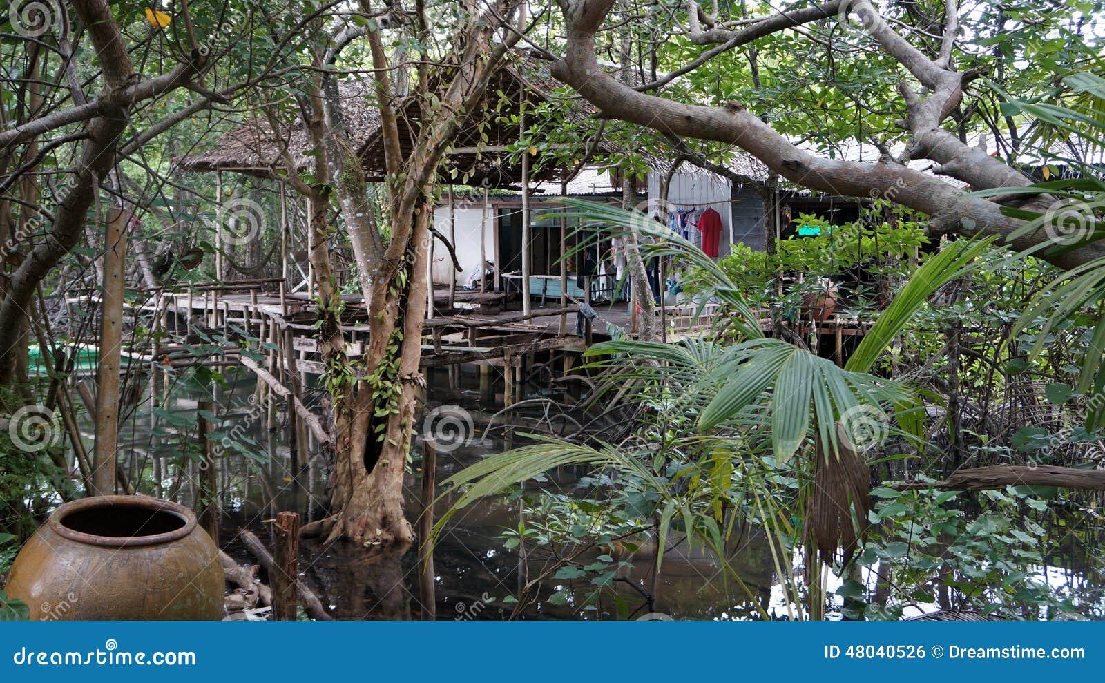 Jungle house stock photo image 48040526 for Jungle house music