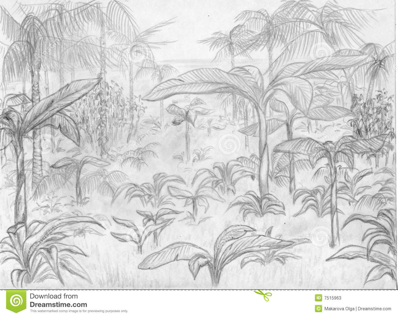 Jungle landscape palm trees and all that pencil drawing