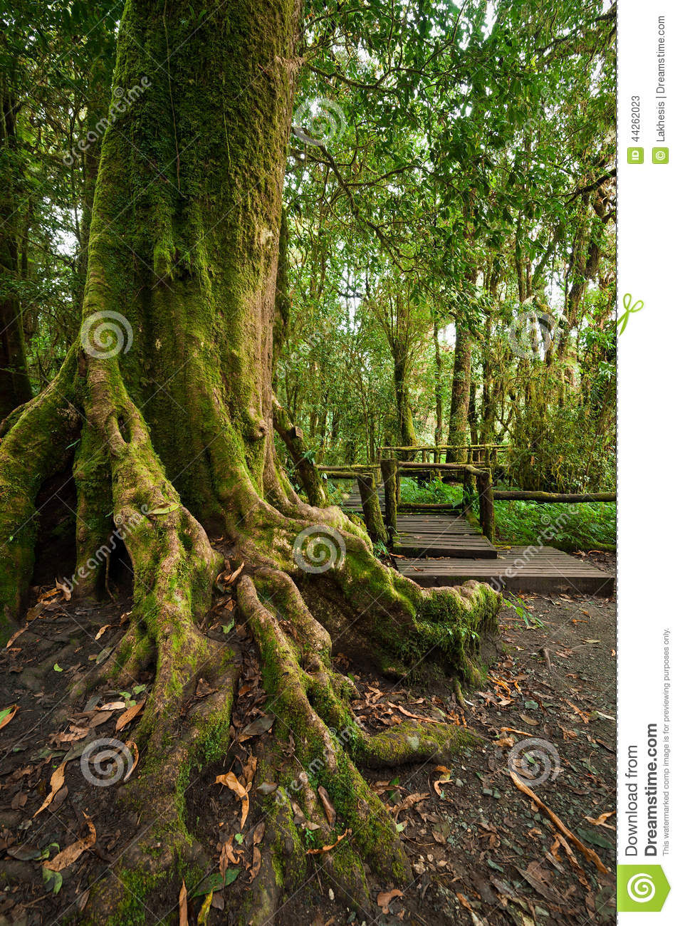Backyard Jungle Tropical Landscapes : Jungle landscape Outdoor park with big tree roots at tropical rain