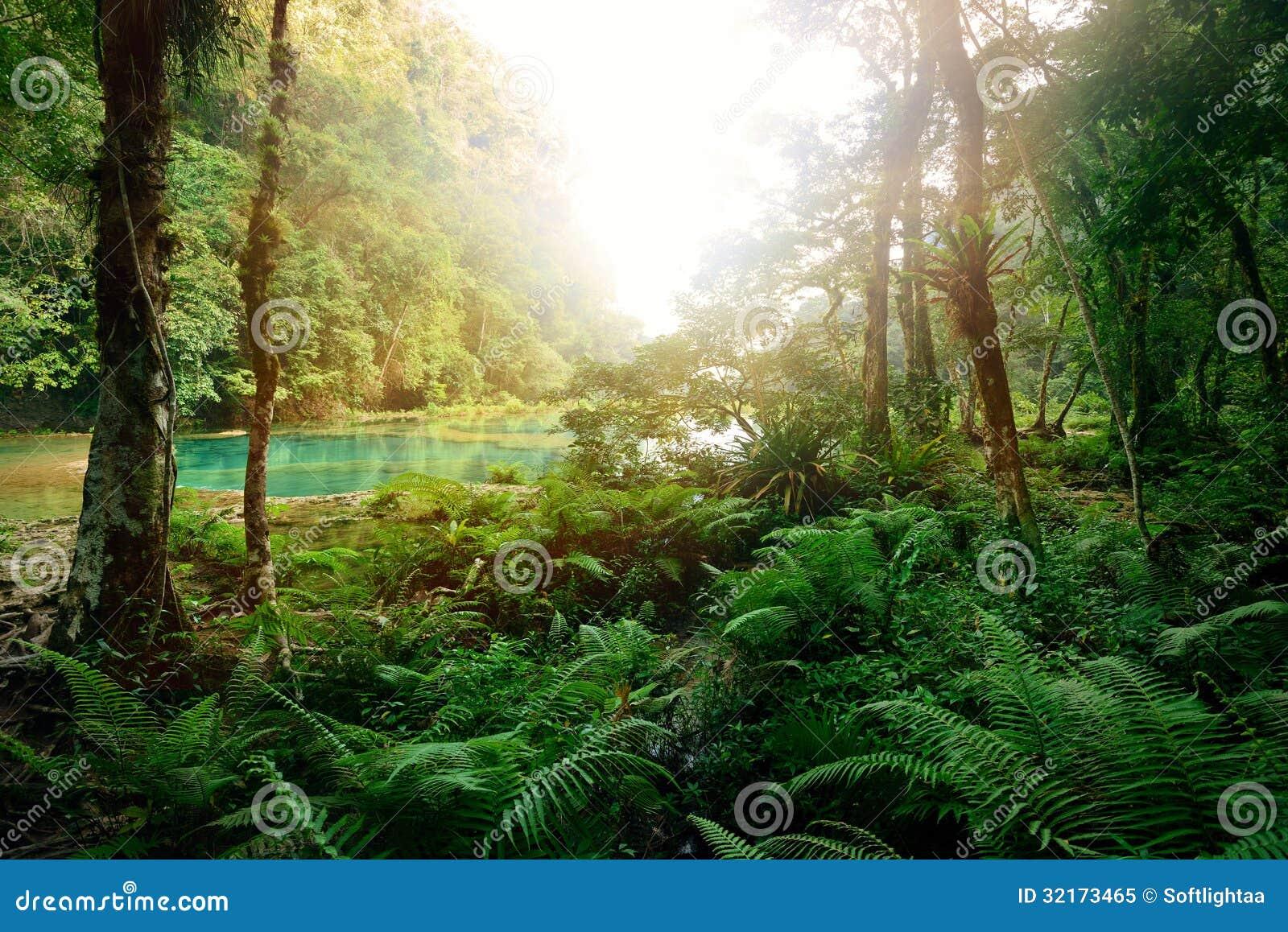 Jungle maya mystérieuse en parc national Semuc Champey