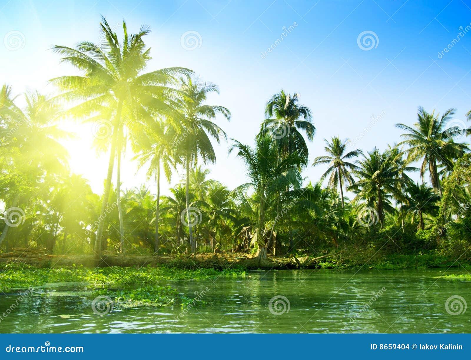 Jungle Thaïlande