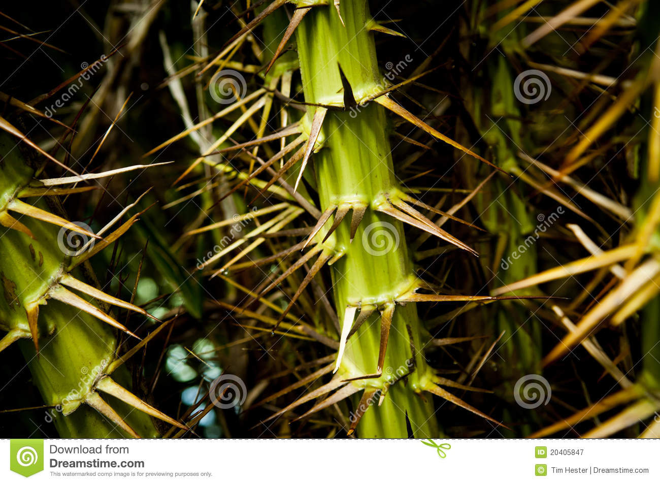 Jungle Thorns Spikes Royalty Free Stock Photography