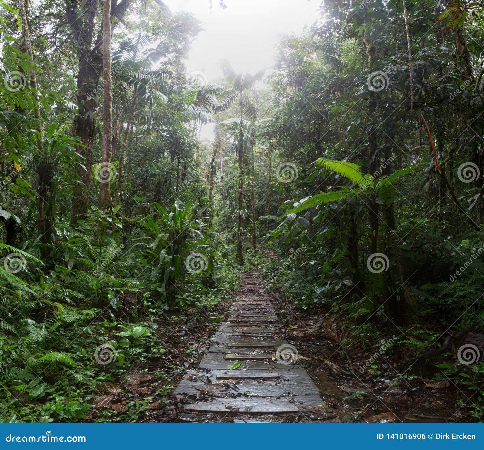 Jungle trail in the amazon rain forest