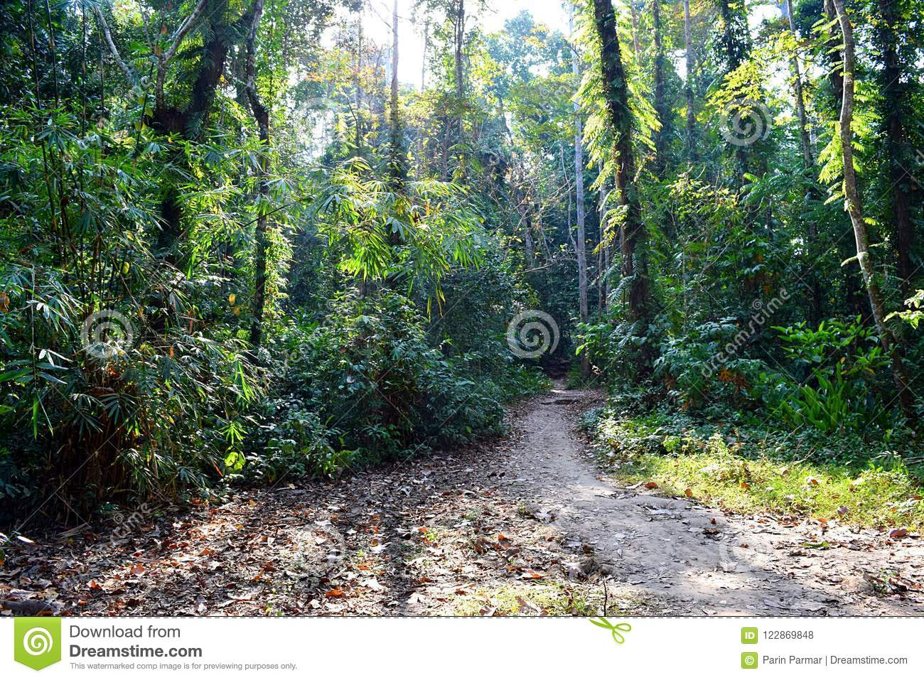 Jungle Trail - Path through Green Trees - Tropical Forest in Andaman Nicobar Islands, India