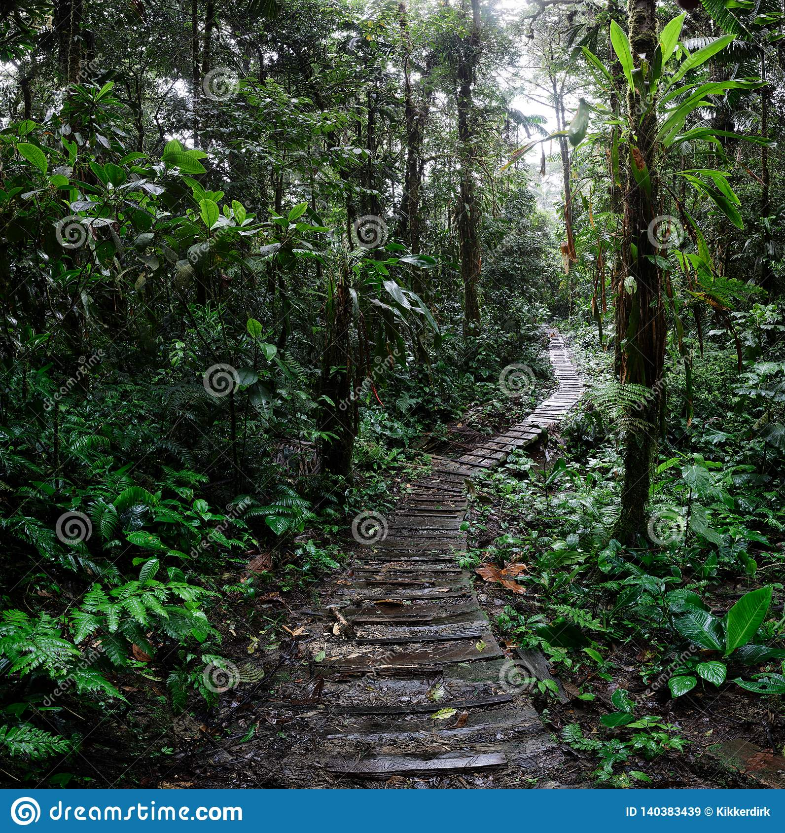 Jungle trail winding trough the Amazon rain forest of Colombia
