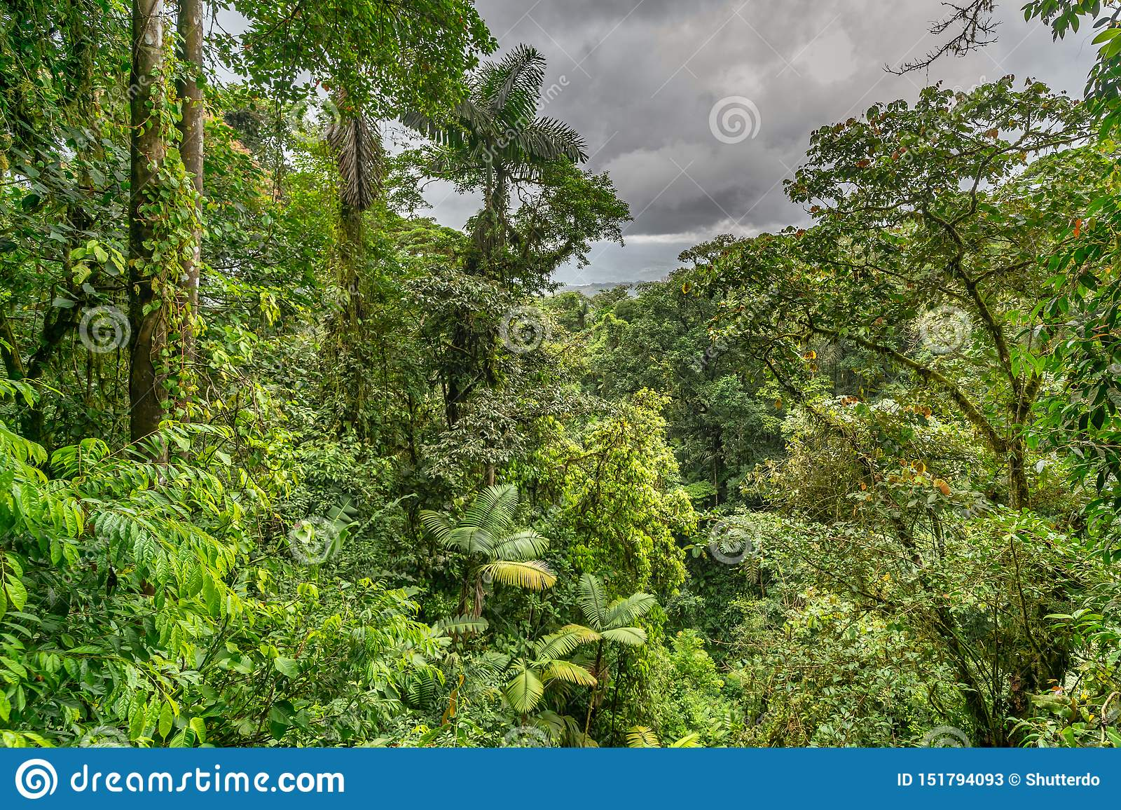 Jungle viewed from the canopy bridge