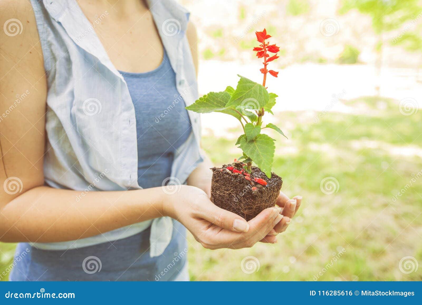 Jungpflanze bereit zum Sämling