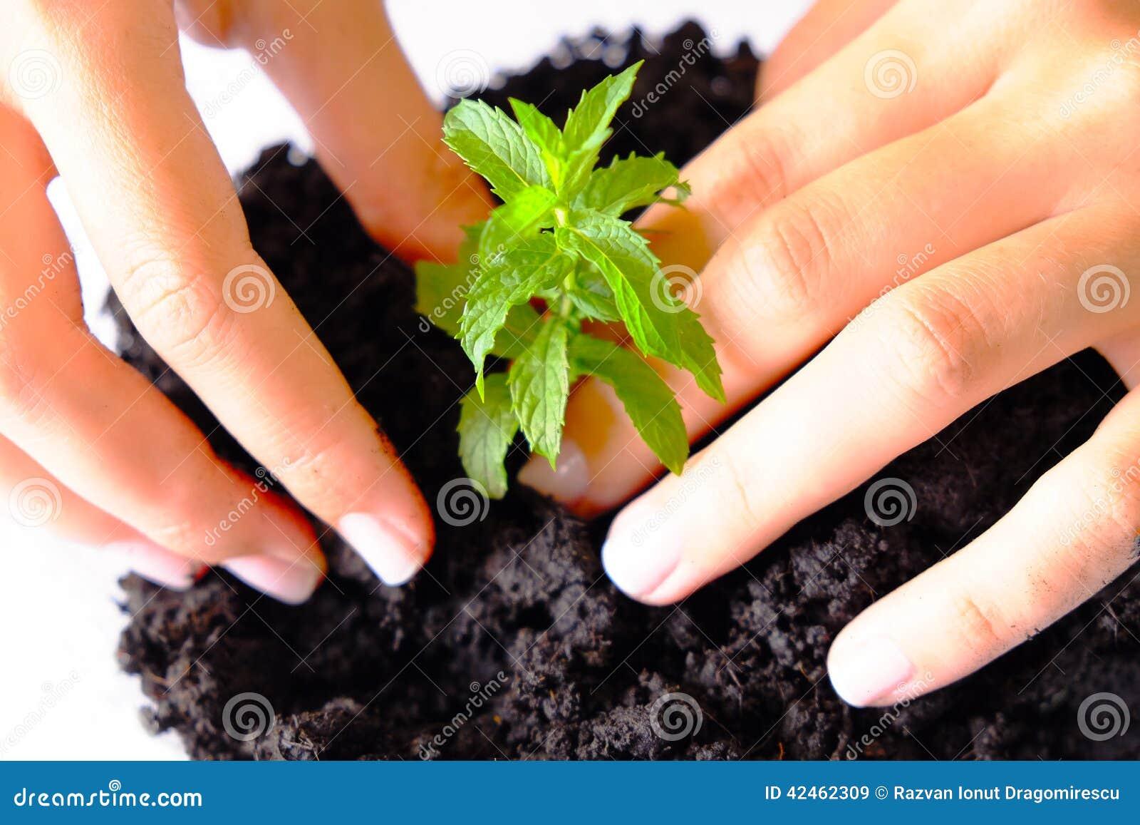 Jungpflanze-Landwirtschaft