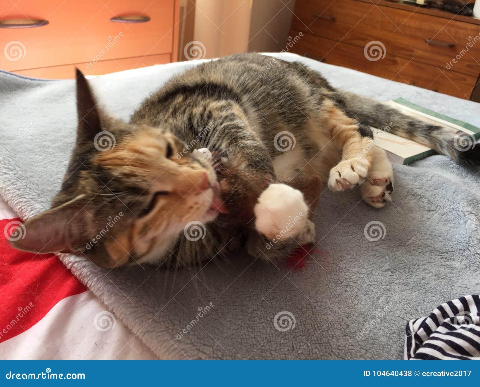 Download Junior Girl-de Noteringen Van De Kattengestreepte Kat Stock Foto - Afbeelding bestaande uit slaap, ogen: 104640438