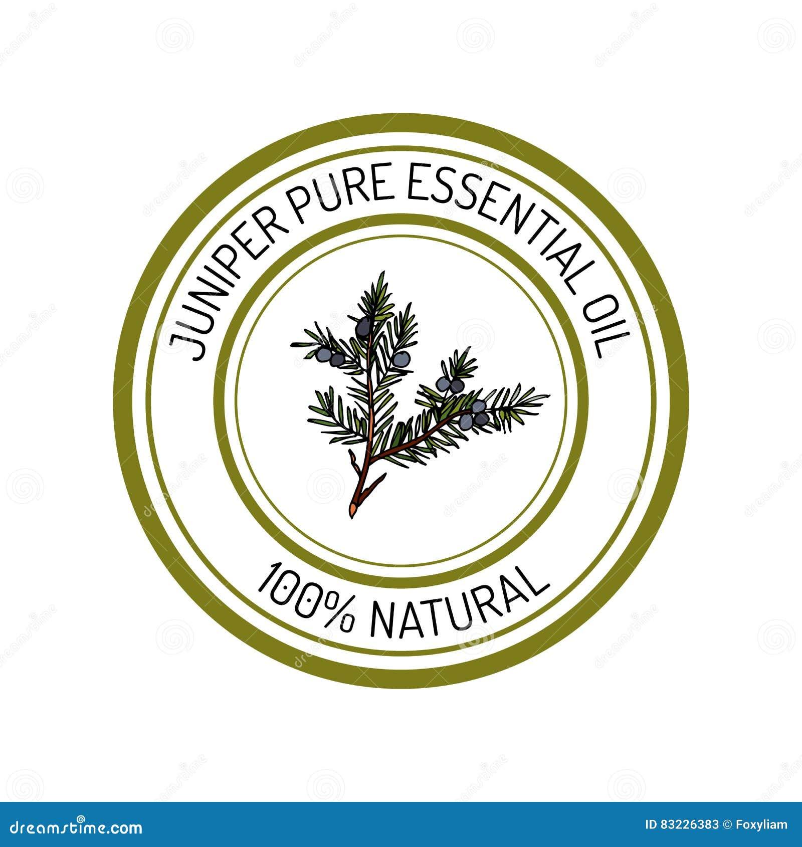 Juniper Essential Oil Label Aromatic Plant Stock Vector