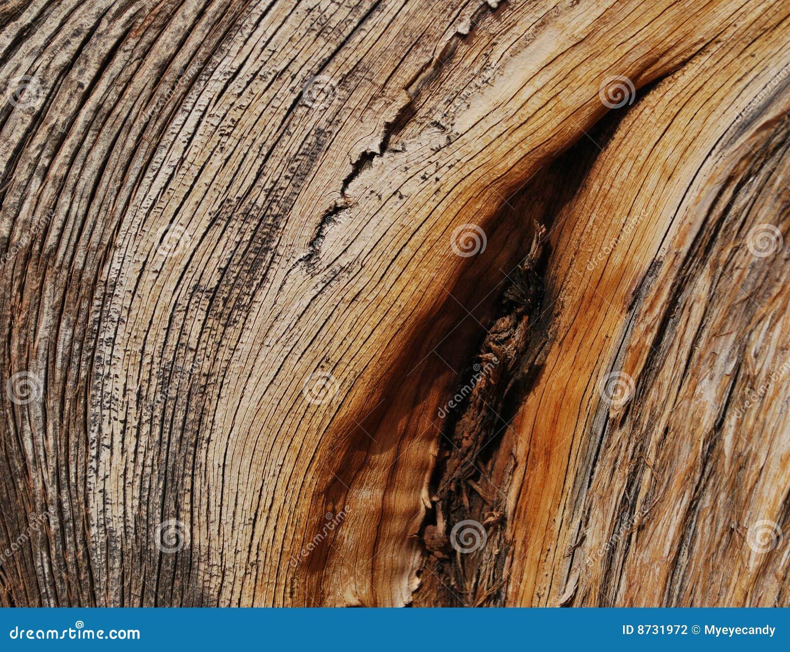 Juniper wood texture
