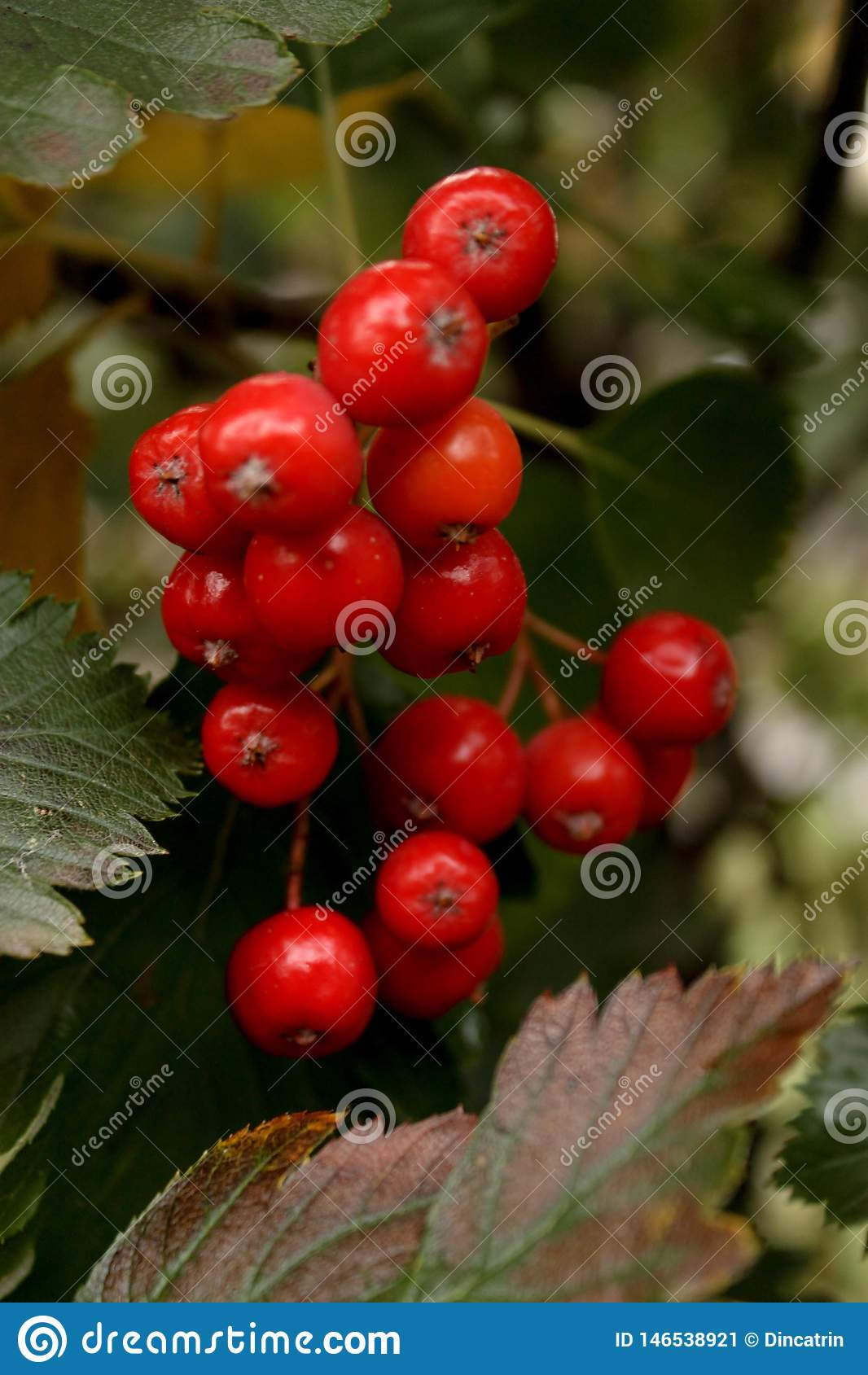 WOW! So nice red berries