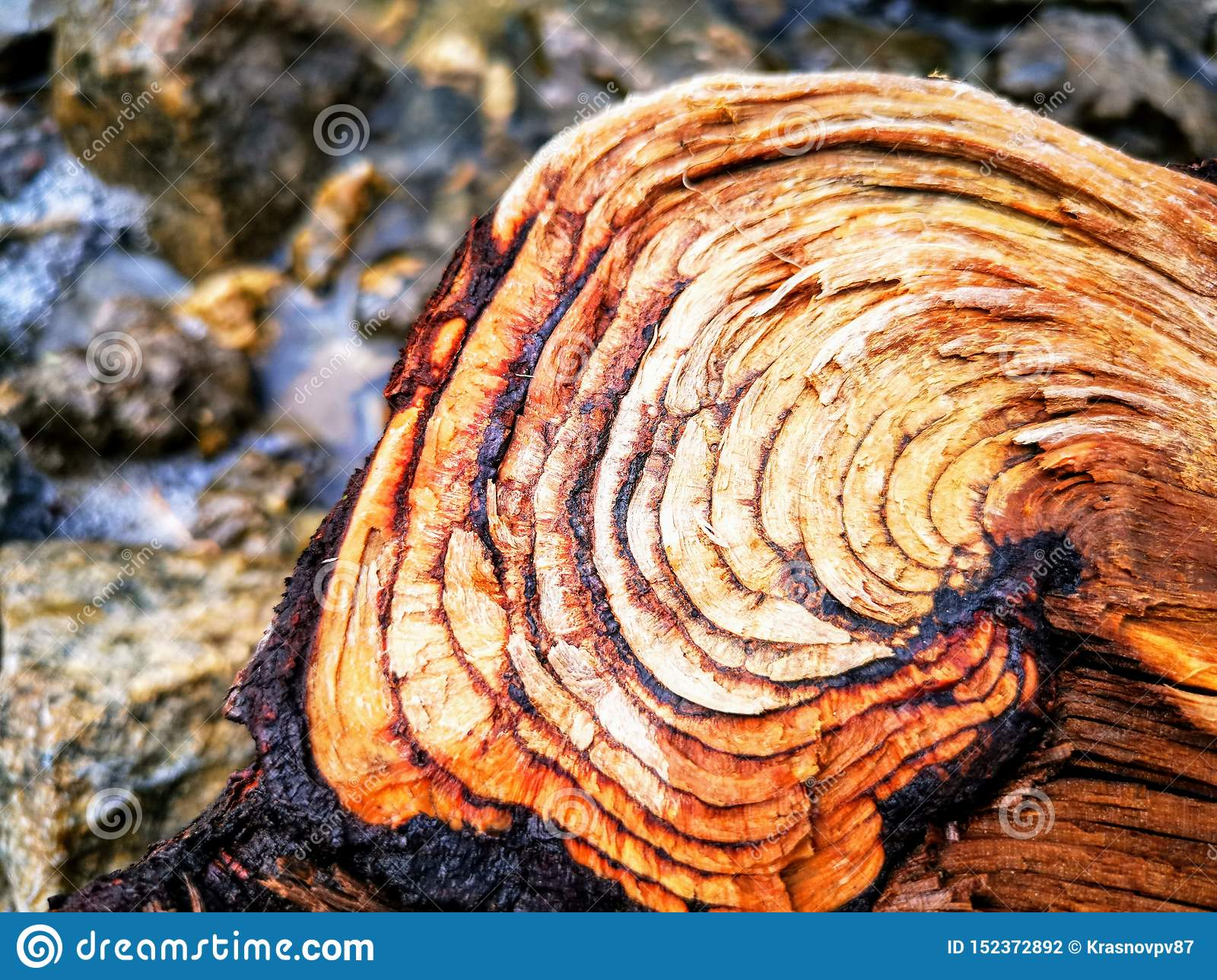 Just a log.