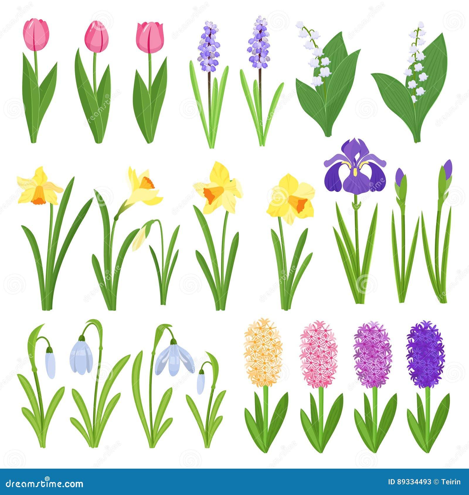 Just rained Iriers, liljor av dalen, tulpan, narcissuses, krokusar och andra primulor Trädgårds- designsymboler