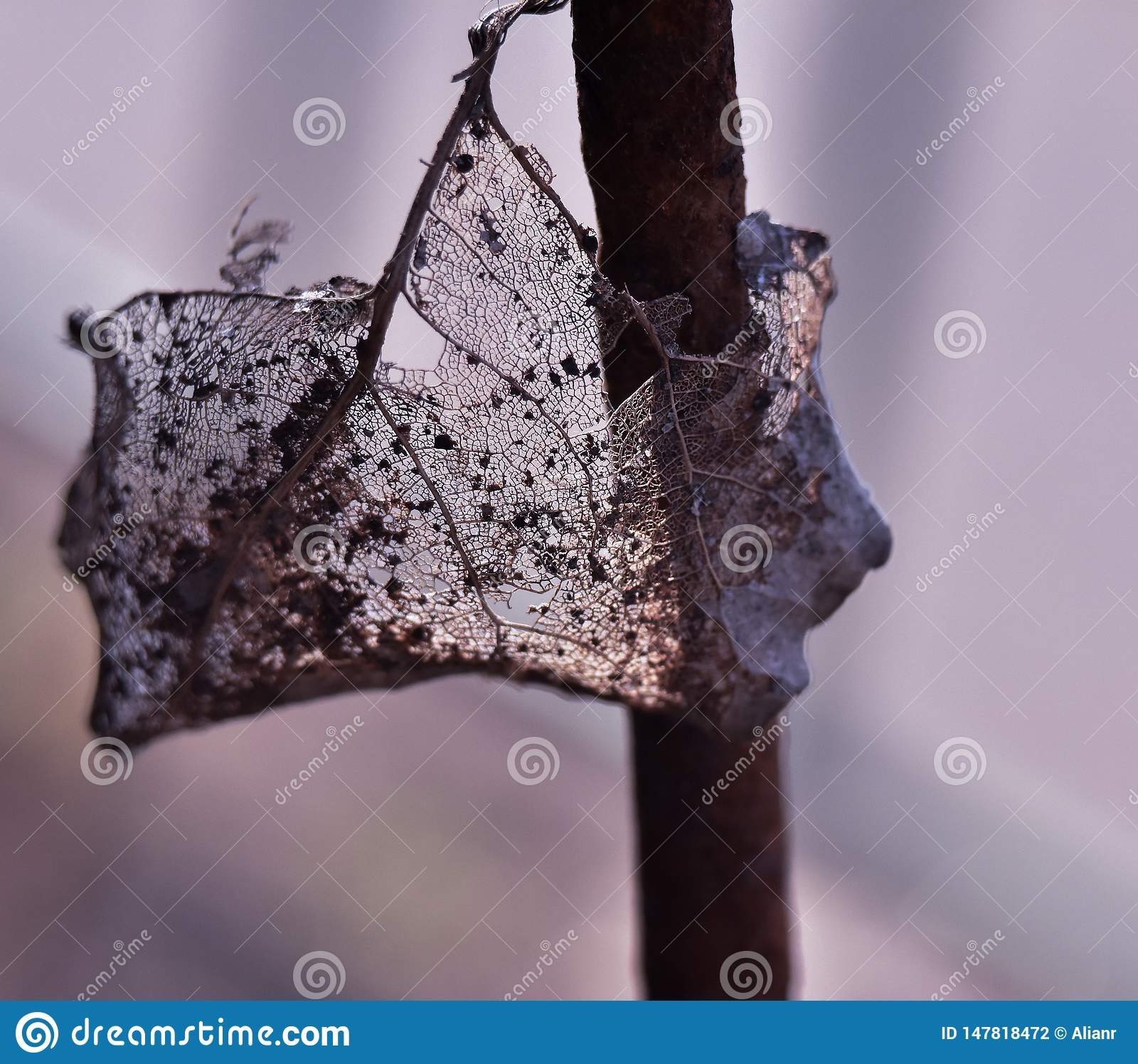 Macro photo of a dry leaf hanging on a metal pin
