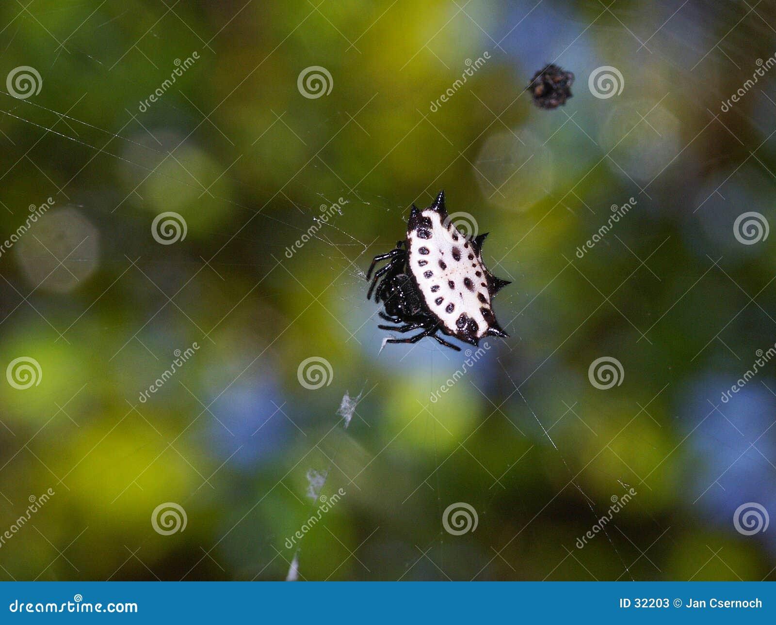 Juwel, Befestigungsklammer oder stachelige Spinne