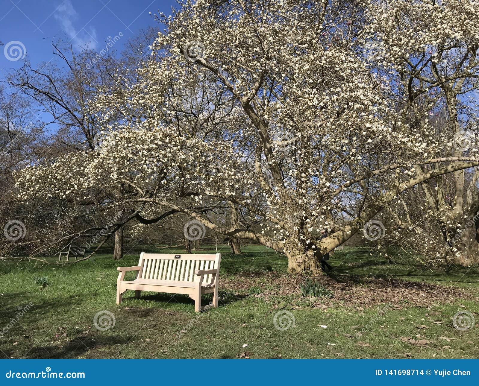 Kąt Kew ogródy