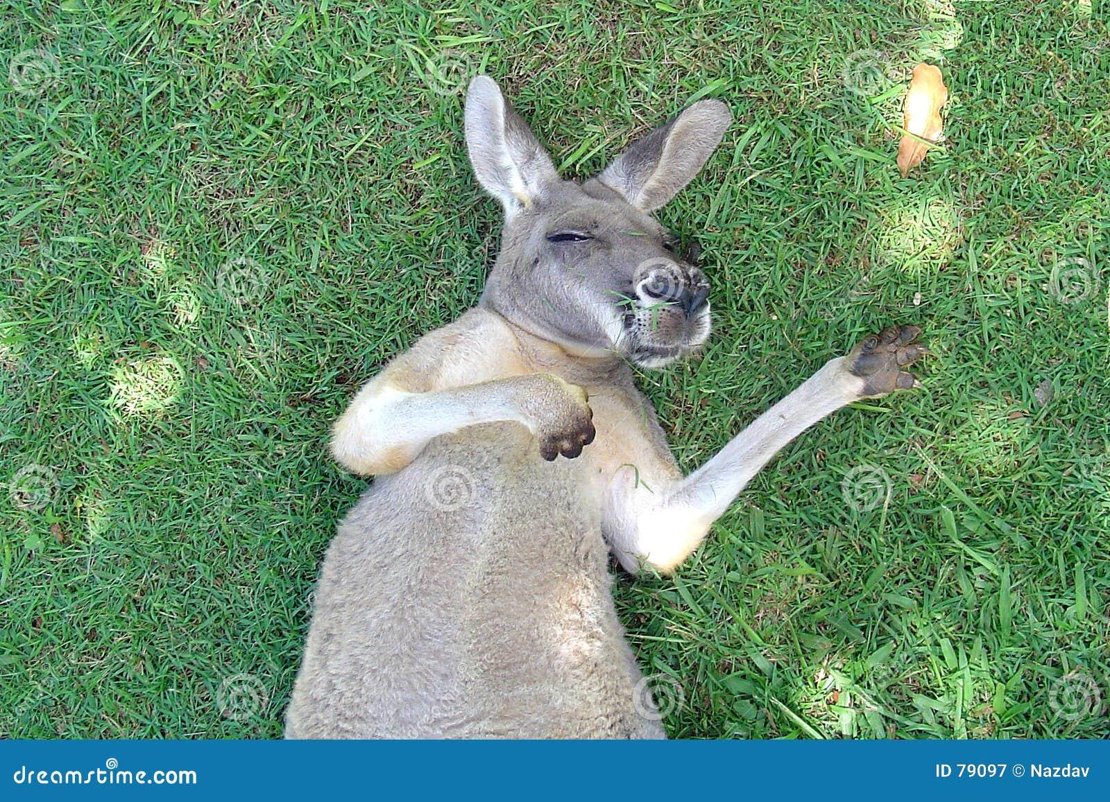 KänguruSnooze