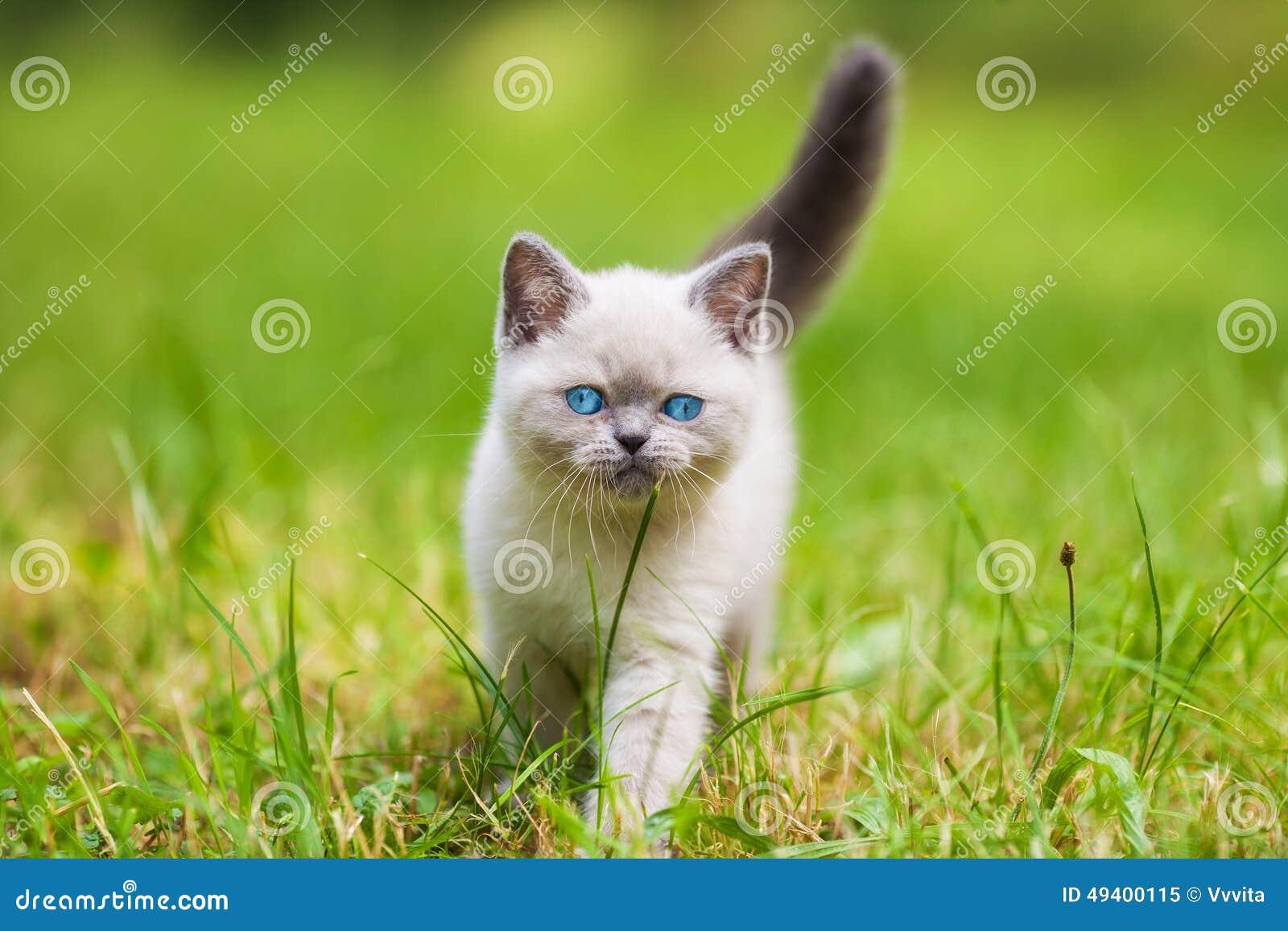 Download Kätzchen Auf Einem Grünen Gras Stockbild - Bild von frisch, feiertag: 49400115