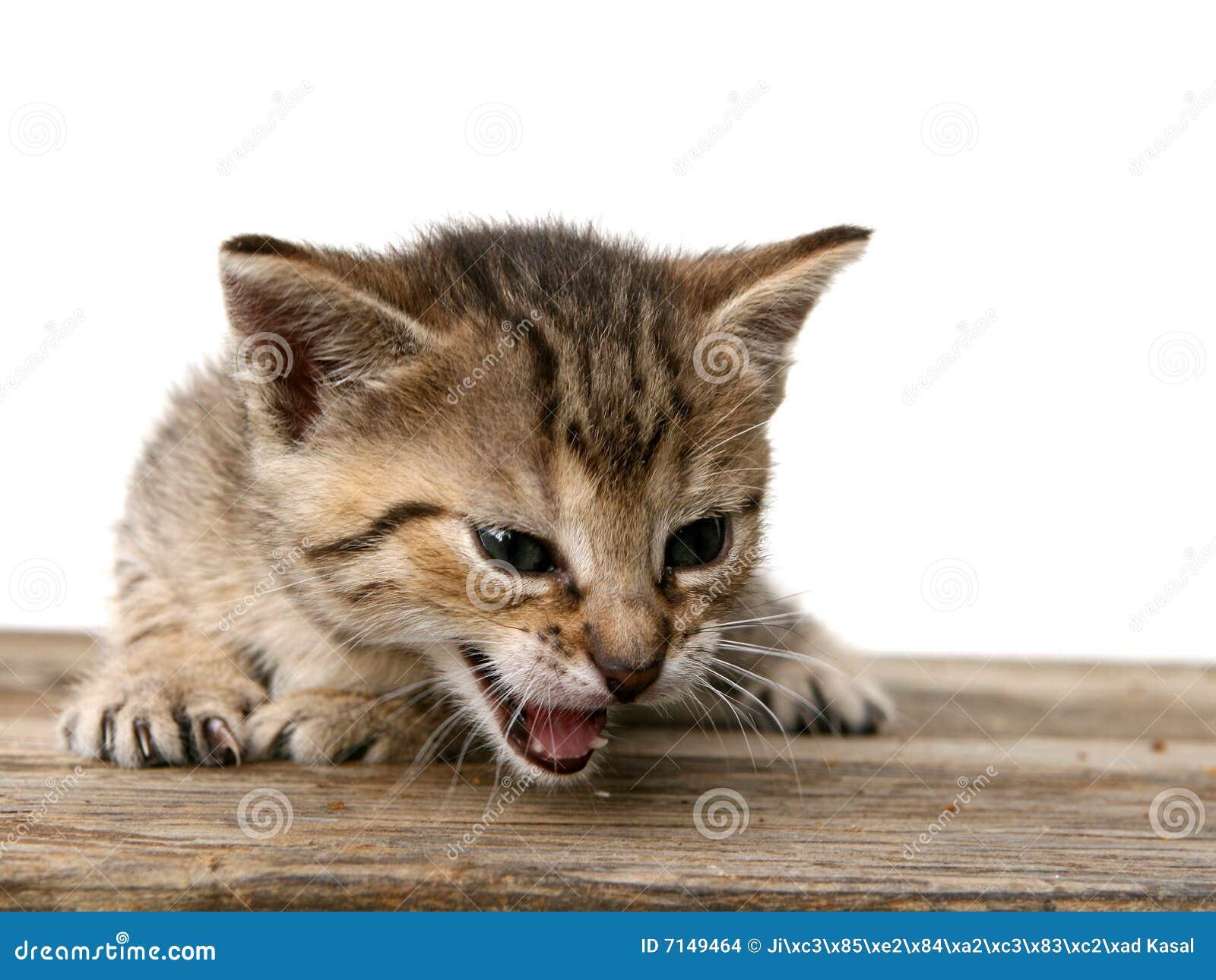 Kätzchen auf hölzernem Schreibtisch