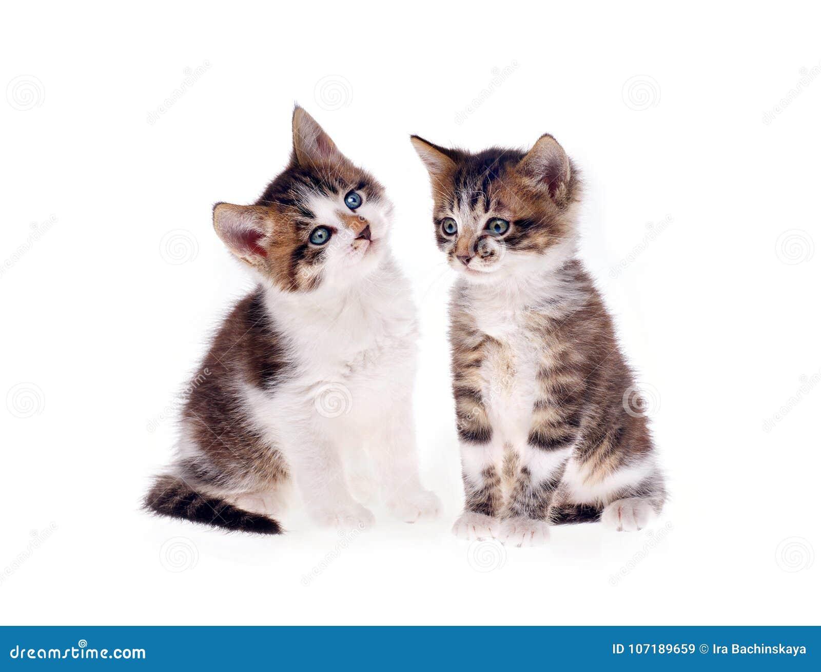 Kätzchen auf weißem Hintergrund