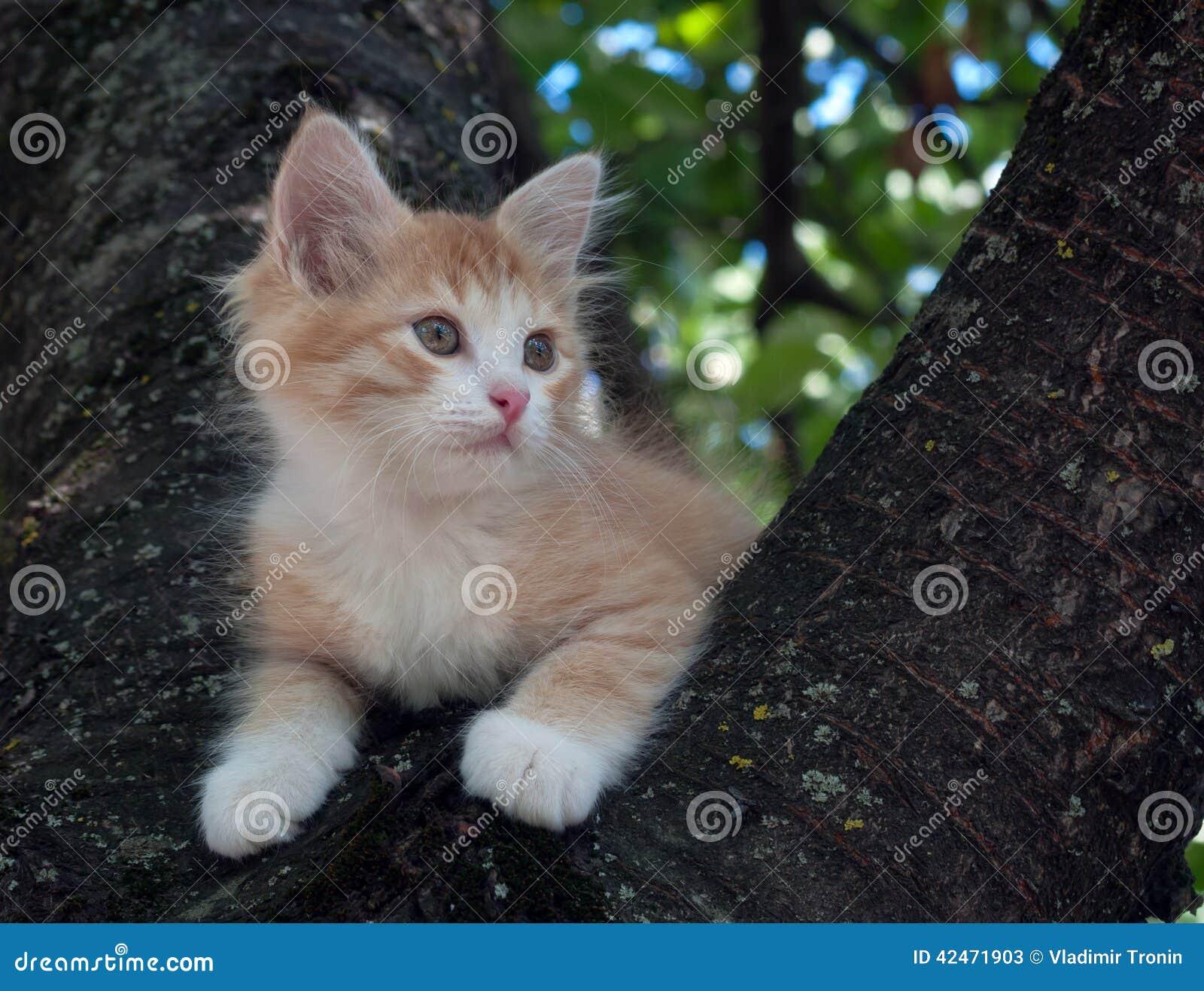 Kätzchen, das in einem Baum sitzt