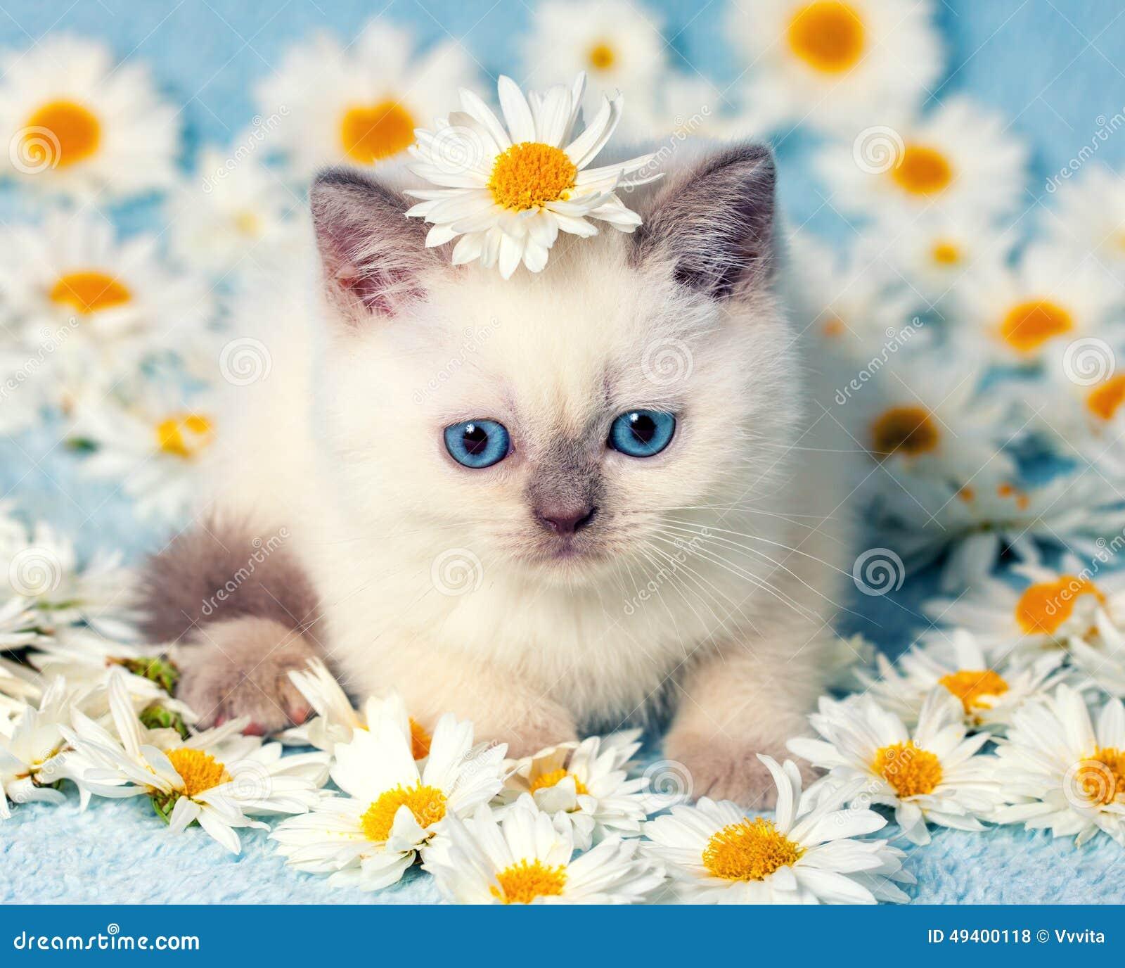 Download Kätzchen in den Blumen stockfoto. Bild von innen, augen - 49400118