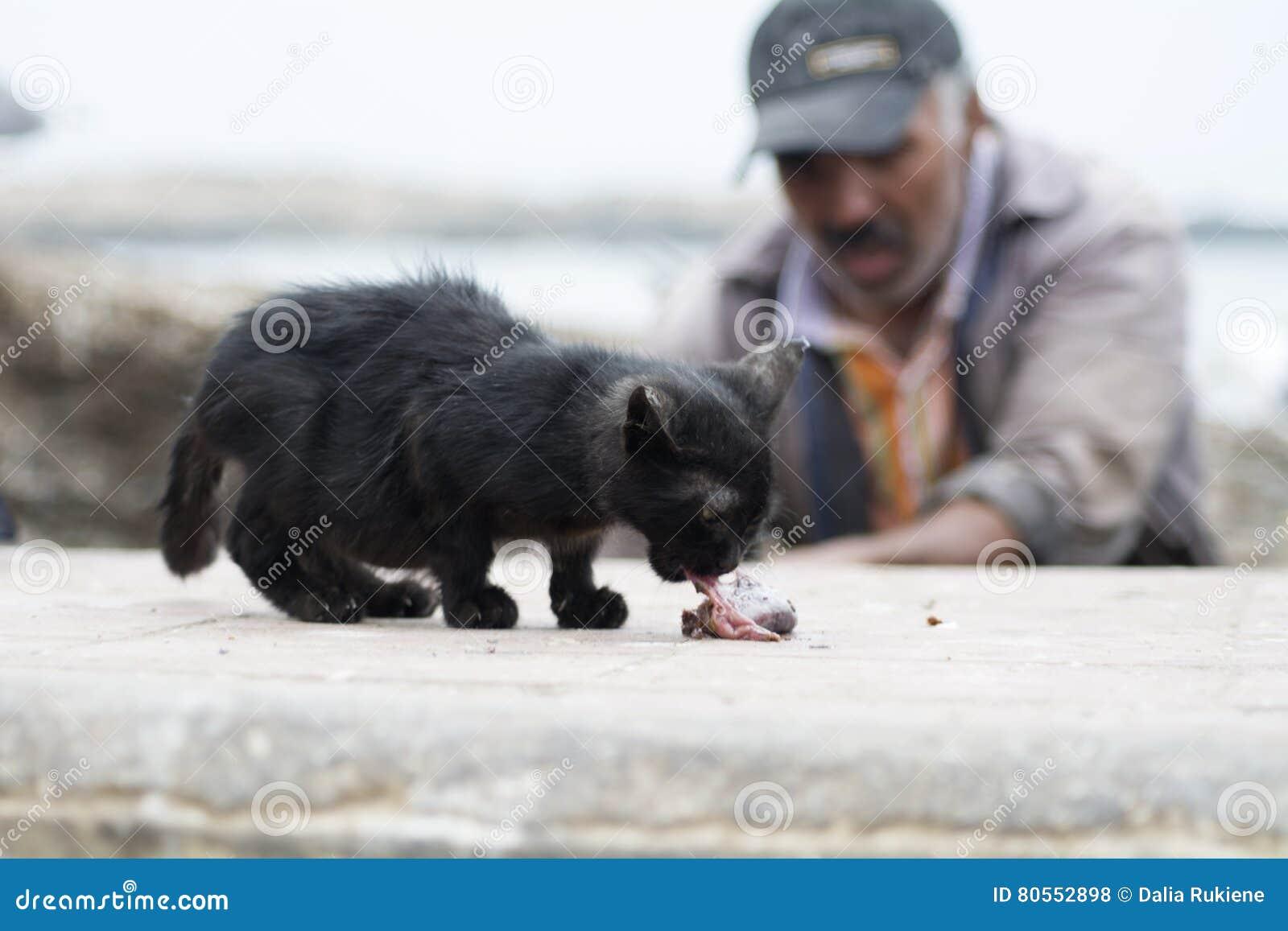 Kätzchen essen die Fische, Essaouira Marokko