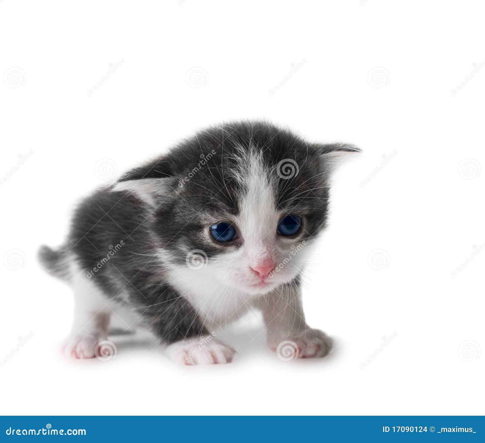 Kätzchen getrennt