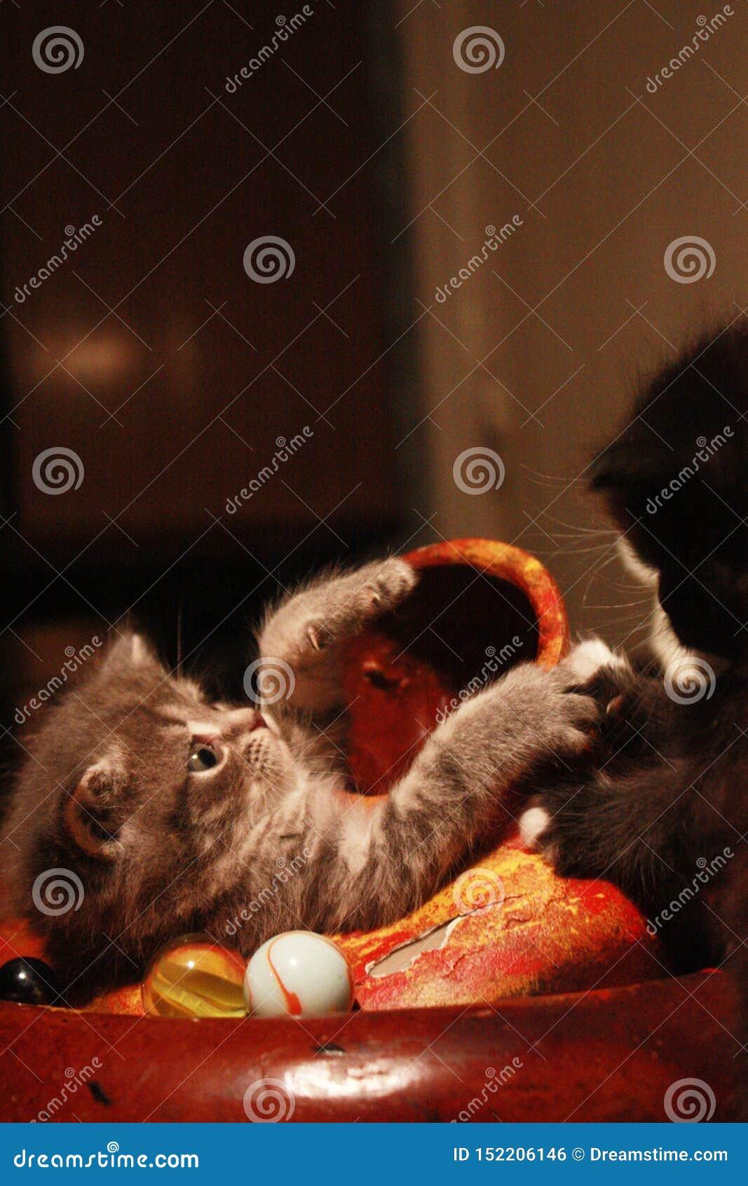 Kätzchen und didgeridoo