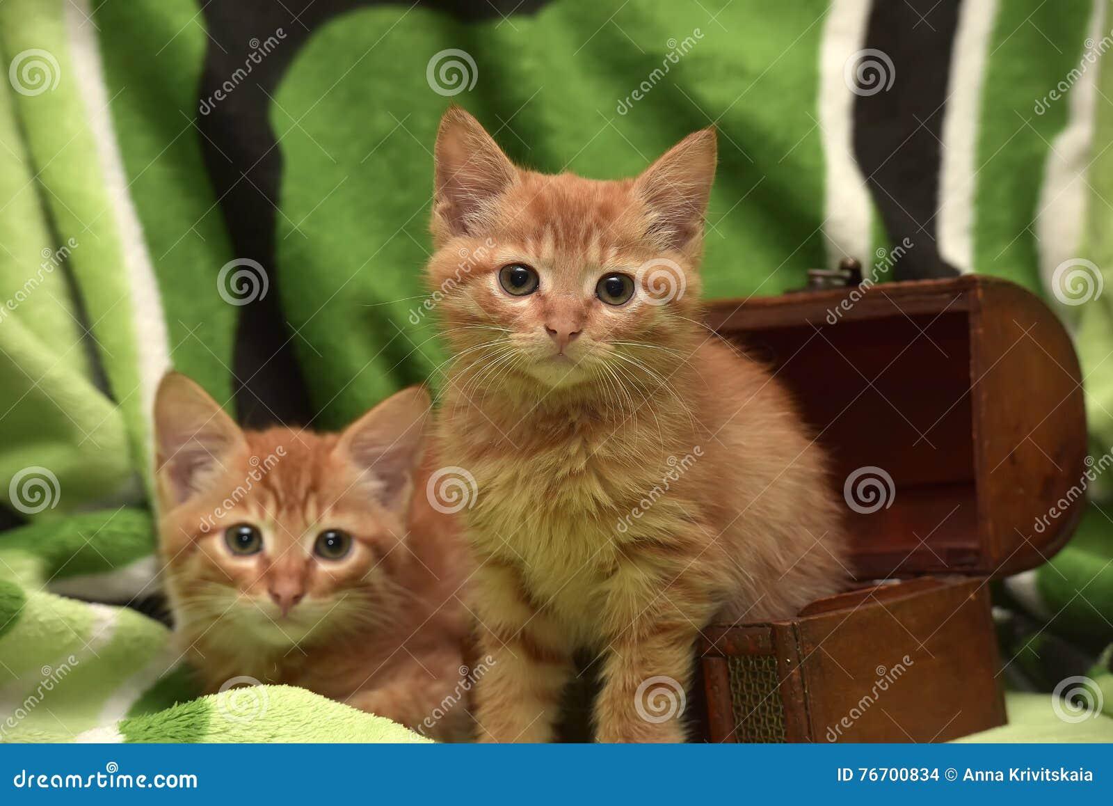Kätzchen und Kasten mit zwei Rottönen