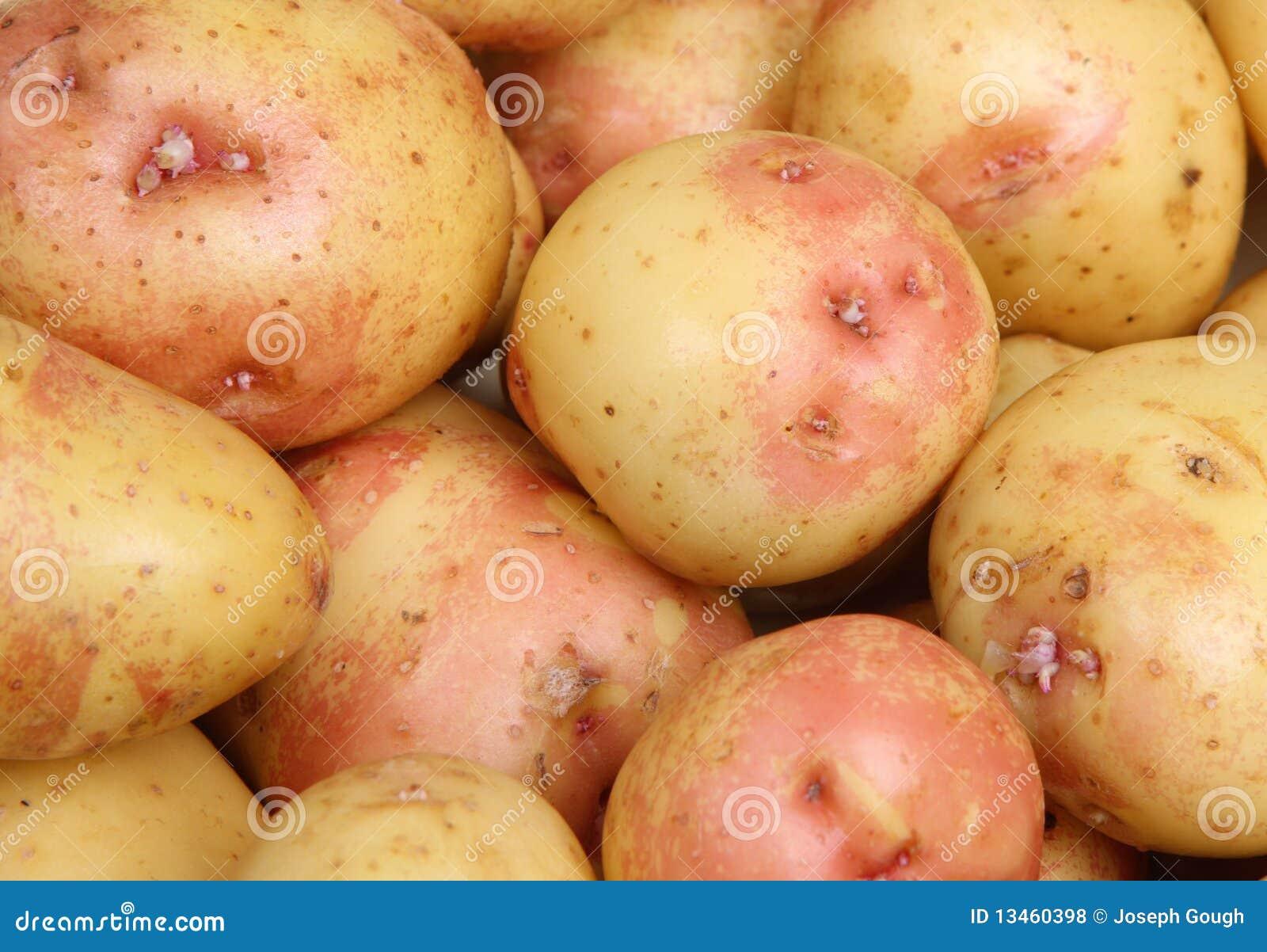 König Edward Potatoes