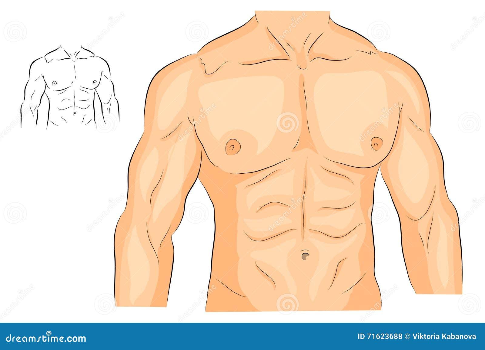 Körper der Männer s bewaffnet Schultern Kasten und ABS