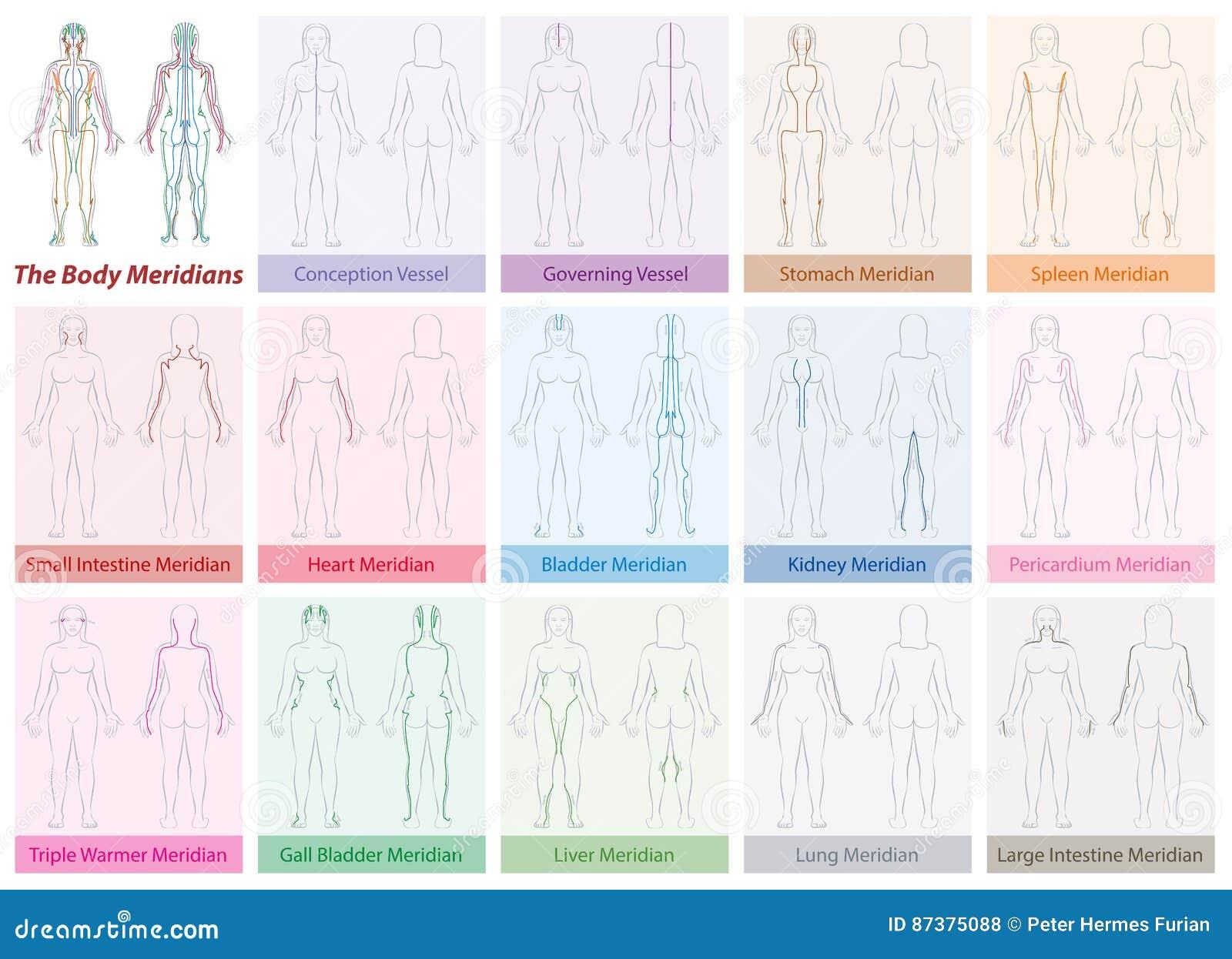 Körper-Meridian-Diagramm-Frauen-Farben Vektor Abbildung ...