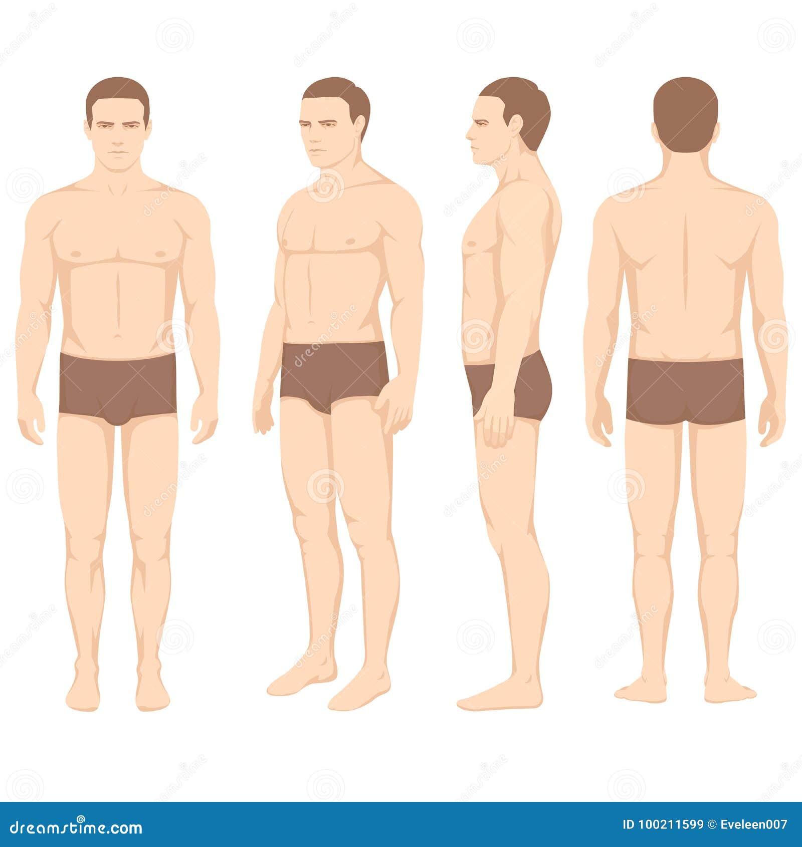 Körperanatomie, Rückseite Der Vektormannfront Vektor Abbildung ...
