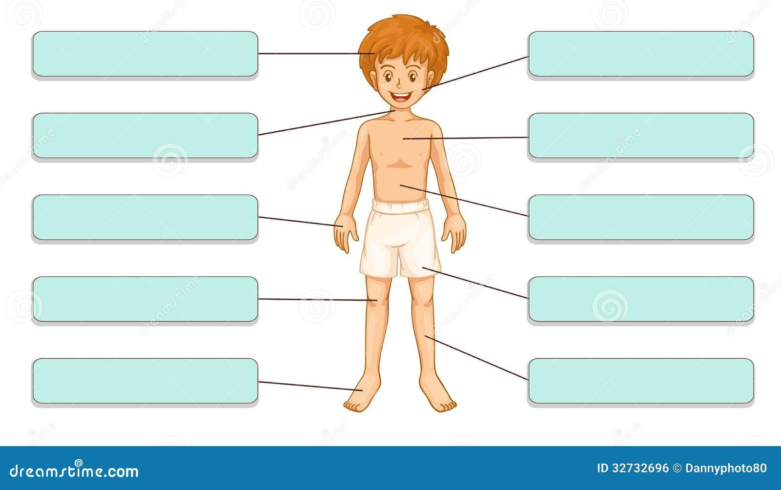 Körperteile stock abbildung. Illustration von hand, stirn - 14986567