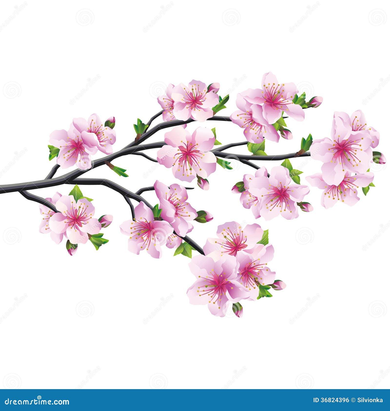 Körsbärsröd blomning, japanskt träd sakura