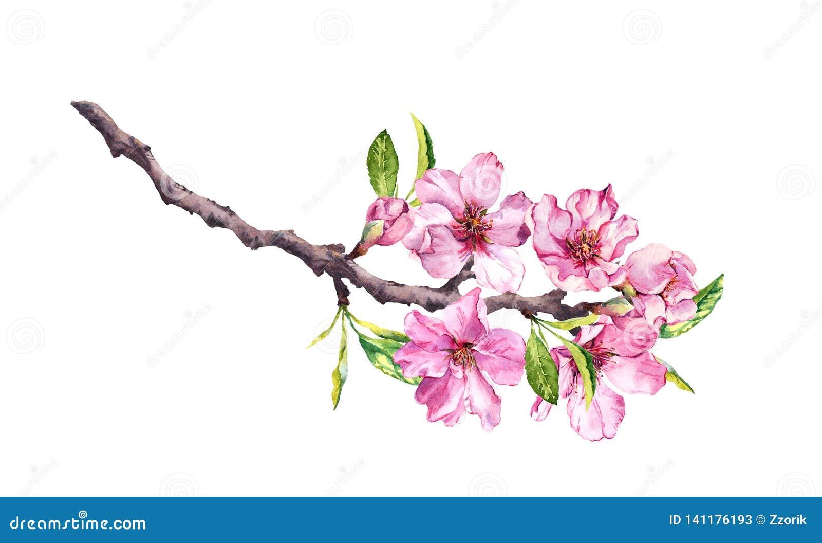 Körsbärsrött träd för blomning Det rosa äpplet blommar, sakura, mandelblommor på blommande filial vattenfärg